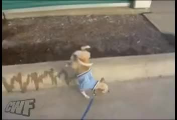 Watch and share Dog Pees On Curb GIFs and Funny Animals GIFs on Gfycat