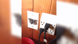 mouse trapped in outlet • r/thisismylifenow GIFs