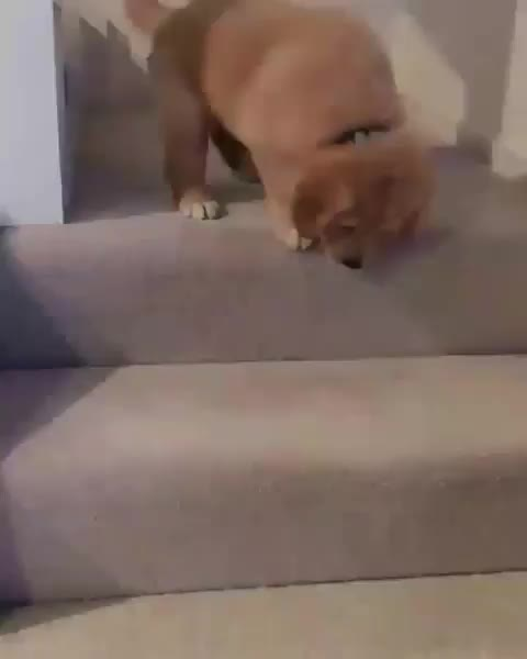 Watch and share Puppyvideos GIFs and Cuteanimals GIFs by notmyproblem on Gfycat