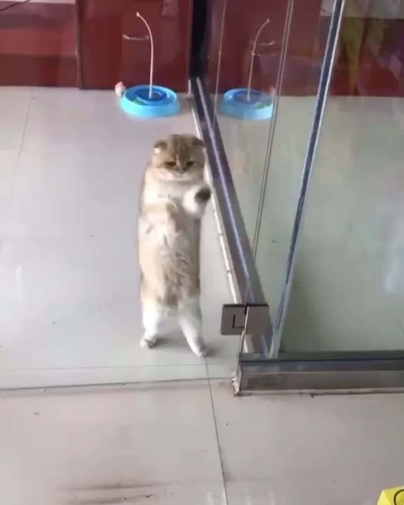 Watch and share I Am The Karate Kitty! Wax On, Wax Off!-gzpph01wzcf21 GIFs on Gfycat