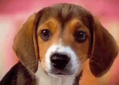 Watch and share Puppy! GIFs by Nomorefoxgiven on Gfycat