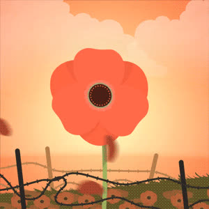 In Flanders fields the poppies blow… GIFs