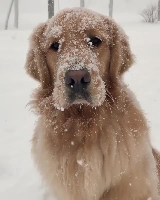 Watch and share Snowy Boy GIFs by tothetenthpower on Gfycat