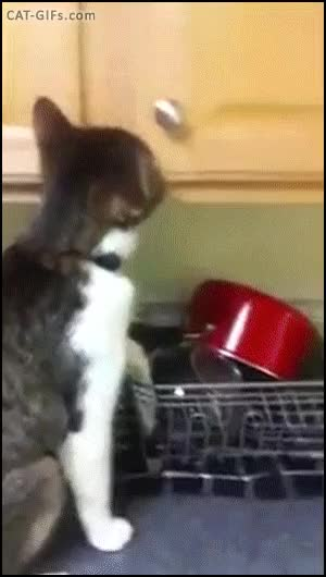 Watch CAT GIF • Naughty Cat stealing cat snack in kitchen cabinet like a boss GIF on Gfycat. Discover more CatGifs GIFs on Gfycat