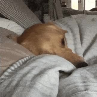Watch and share 148 GIFs by Pupstime on Gfycat