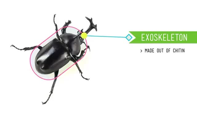 Watch and share Arthropods- Exoskelton GIFs on Gfycat