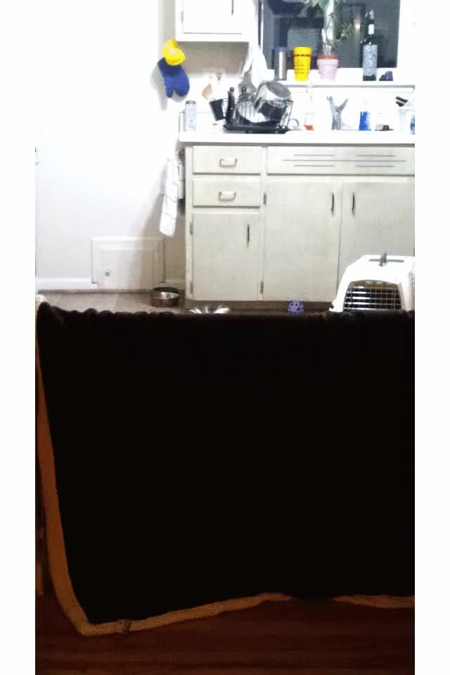Watch and share Bouncing Dog GIFs on Gfycat