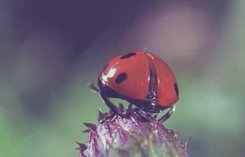 Watch and share Ladybug GIFs and Beetle GIFs on Gfycat