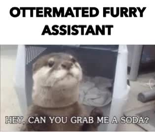 ferret, OTTERMATED FURRY  ASSISTANT GIFs