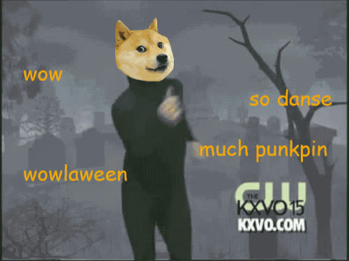 corgi, dance, dancing, excited, halloween, pumpkin head, Corgi Head Dancing GIFs