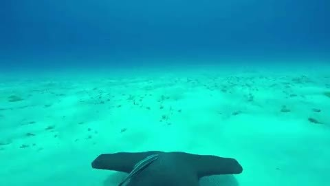 GoPro attached to hammerhead GIFs