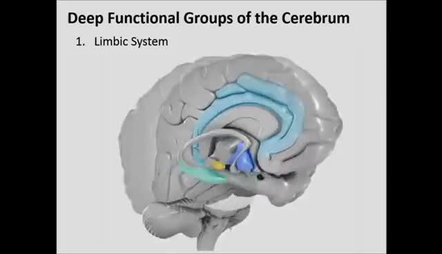 Watch and share Limbic System GIFs on Gfycat