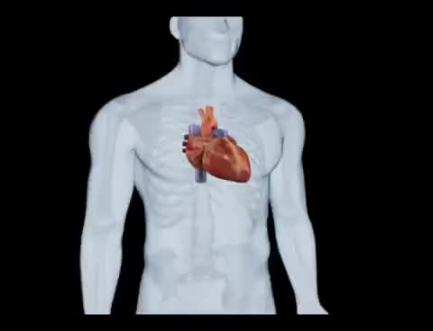 Watch Coração Batendo - Atlas do Corpo Humano GIF on Gfycat. Discover more related GIFs on Gfycat