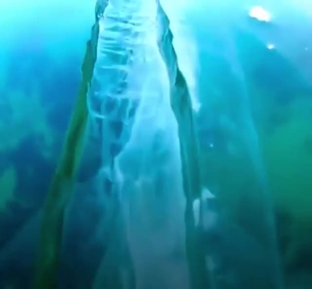 Watch and share The Incredibly Clear Ice Of Lake Baikal GIFs by tothetenthpower on Gfycat