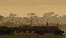 Watch Herd Of Elephants GIF on Gfycat. Discover more related GIFs on Gfycat