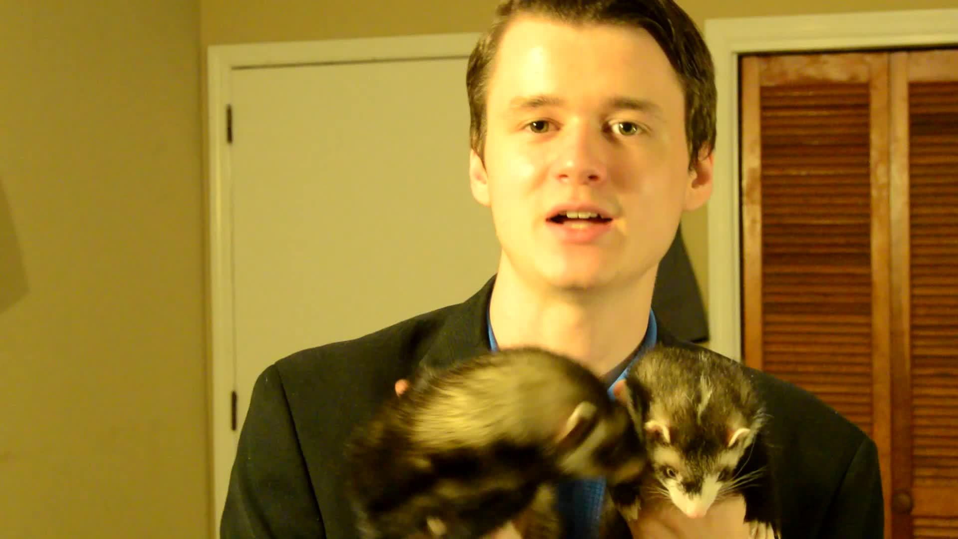 ferrets,  GIFs