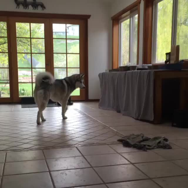 Watch and share Eve Tha Dog And Charlie Tha Cat Playing GIFs by eric.wangsgaard on Gfycat