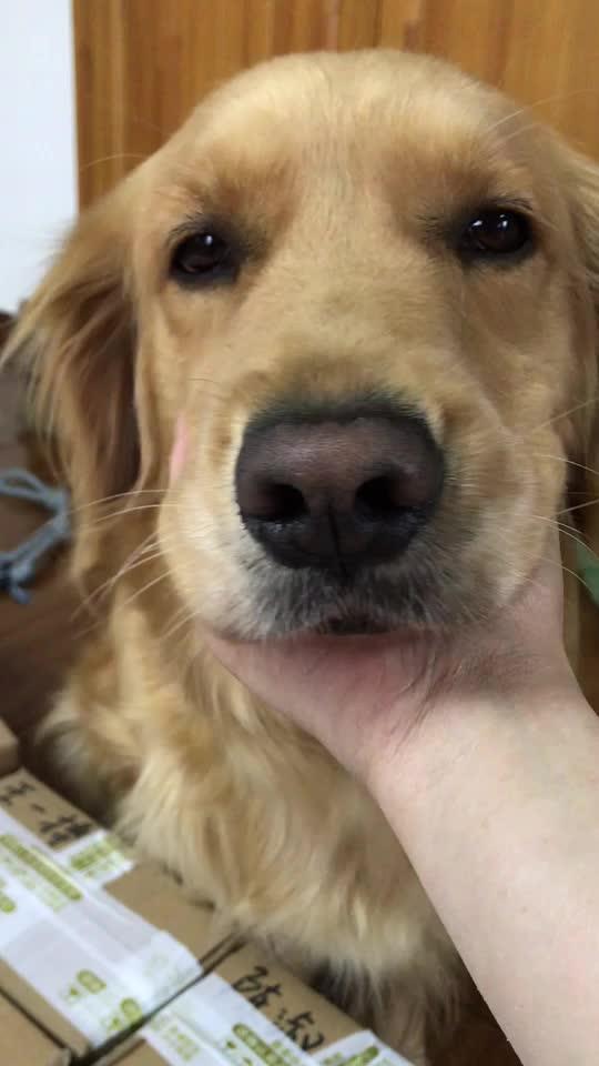 dog, chin scratches GIFs