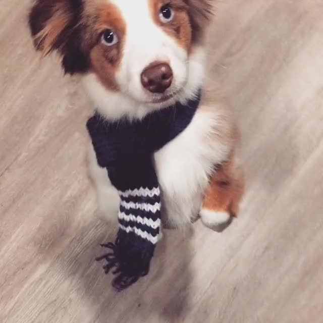 Watch this staffpicks GIF on Gfycat. Discover more Puppy, aww GIFs on Gfycat