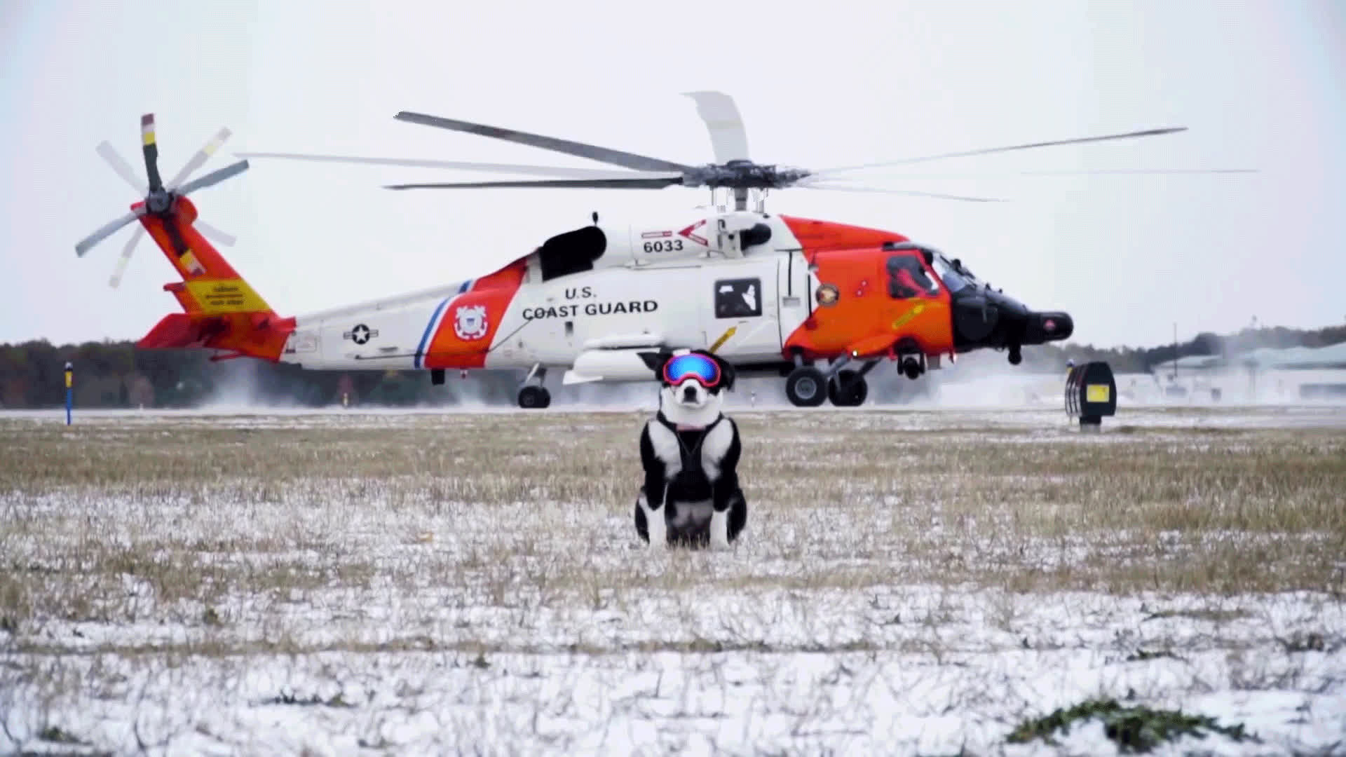 chopper, cinemagraph, dog, goodboy, helicopter, Piper The Aviation Bird Dog GIFs