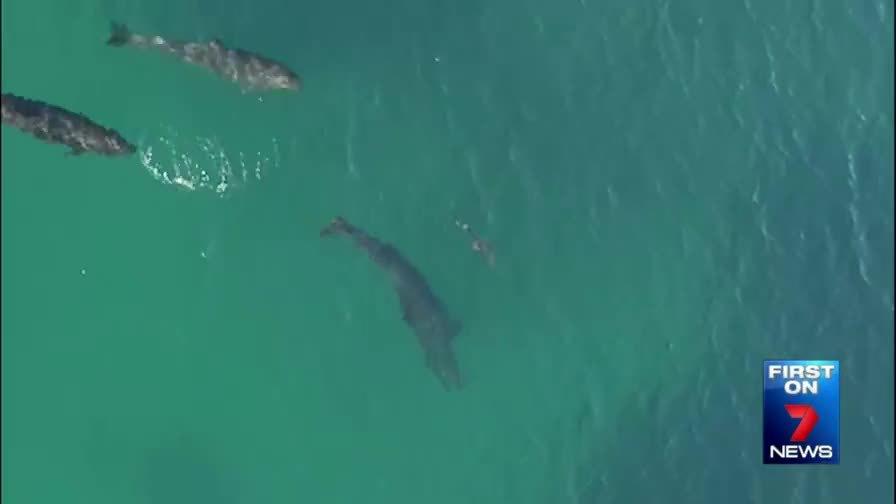 NatureGifs, gifs, natureismetal, Whales v Sharks GIFs