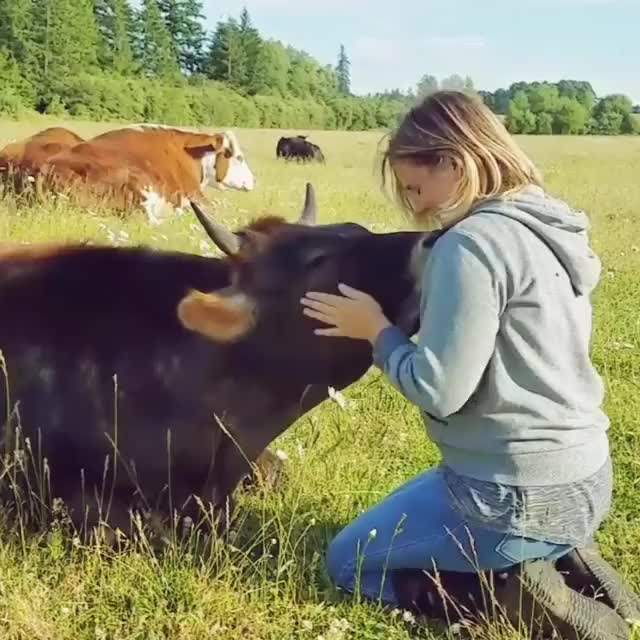 Watch Oliver at Lighthouse Farm Sanctuary GIF by @b12ftw on Gfycat. Discover more friendsnotfood, lighthouse, lighthousefarmsanctuary, rescuecow, sanctuary, someonenotsomething, vegan GIFs on Gfycat