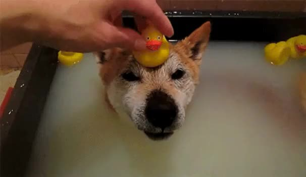 Watch and share Animals Love Taking Bath GIFs on Gfycat
