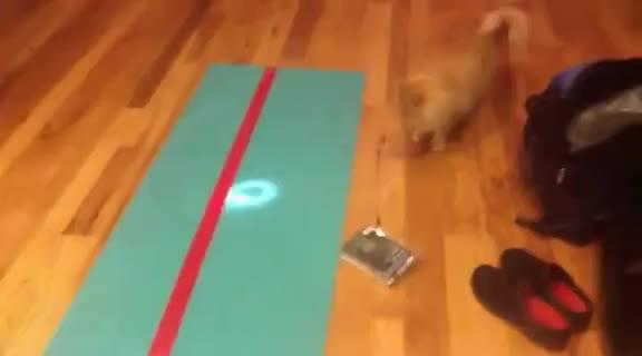 dizzy kat