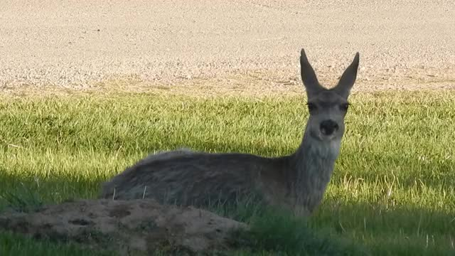 Watch and share Deer GIFs by thegame2010 on Gfycat