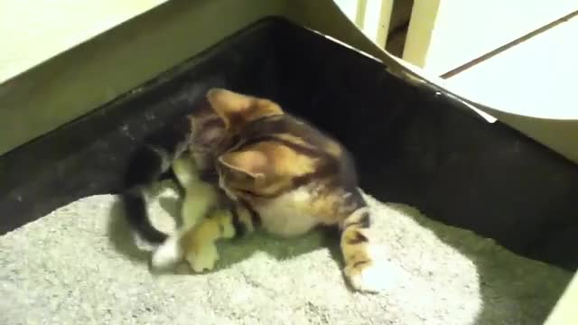 Watch and share Kitten GIFs and Funny GIFs on Gfycat