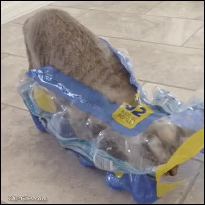 """Watch and share """"What? I Sit And I Sleep Everywhere And Anywhere Because CAT."""" GIFs on Gfycat"""