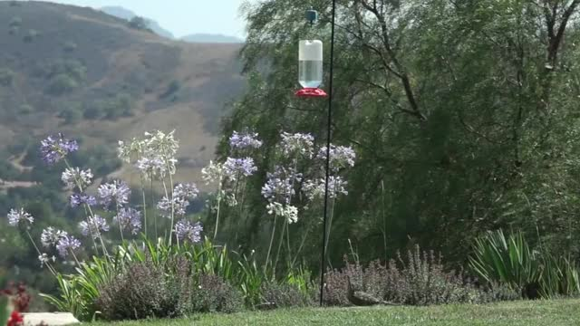 Watch and share 2x Slow-mo Speed Roadrunner Hummingbird Https://youtu.be/onVbjDW-tqQ GIFs on Gfycat