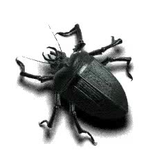 Watch and share Beetle GIFs on Gfycat