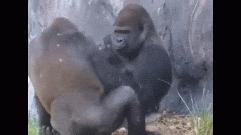 monkeypics, Screw you Bob GIFs