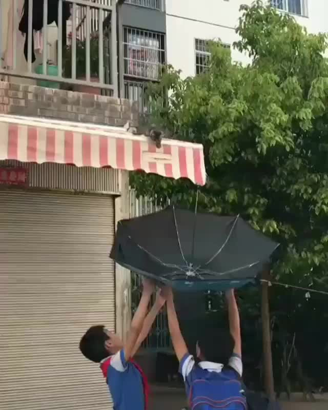 awesome, aww, gifs, humansbeingbros, kitten, Two boys use an umbrella to help a kitten down from an awning (reddit) GIFs