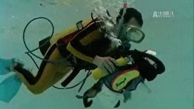 Watch and share Scuba Cat! GIFs on Gfycat