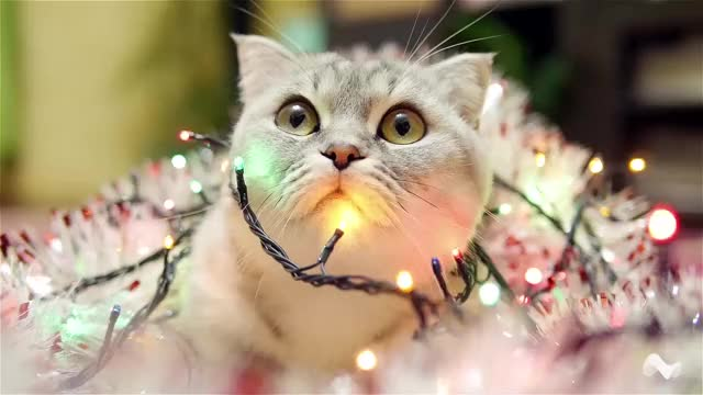 Watch and share Christmas GIFs and Kitten GIFs by Moodica on Gfycat