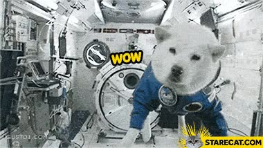 Watch space dog GIF on Gfycat. Discover more related GIFs on Gfycat