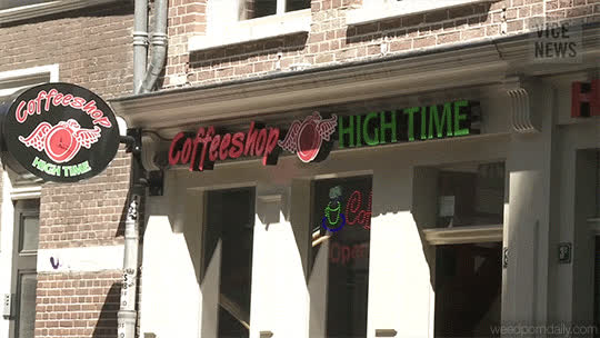 420, amsterdam, buds, canada, cannabis, drugs, ganja, gif, green, grow, growing, herb, kush, marijuana, mary jane, medical marijuana, mmj, vice, Vice - Amsterdam GIFs