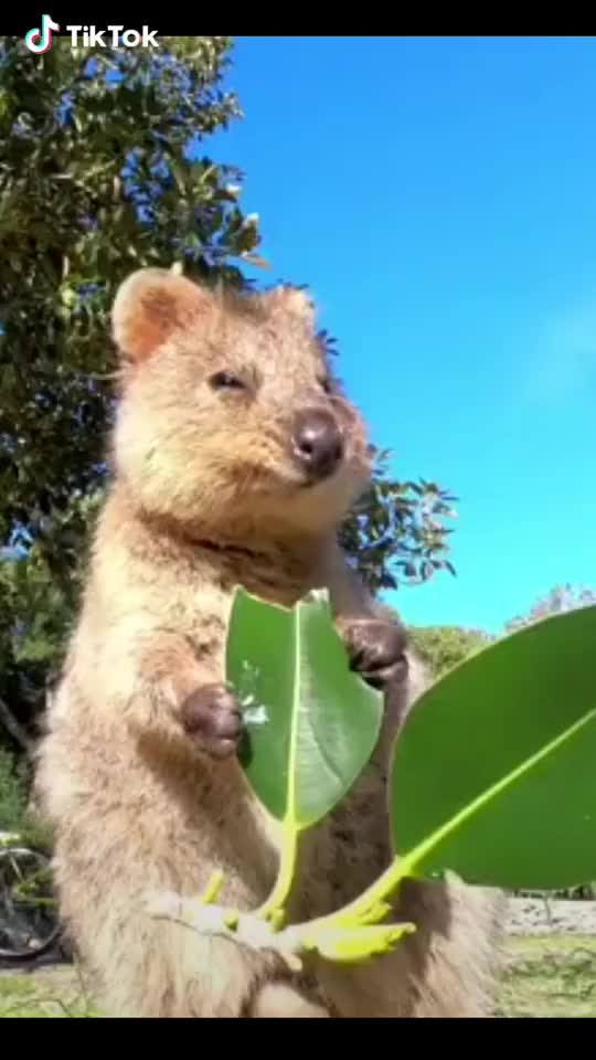 Watch and share Happiness Is Eating A Leaf. GIFs by TikTok on Gfycat