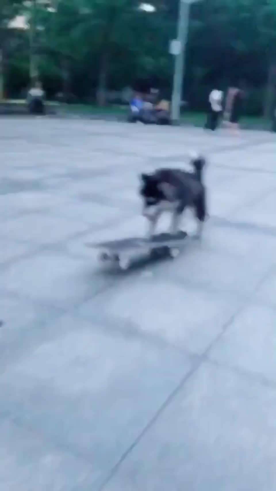 Skateboarding dog. GIFs