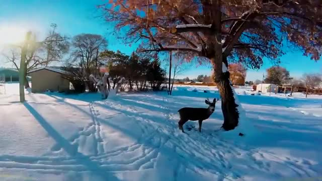 Watch rudolf the fpv reindeer GIF on Gfycat. Discover more corfpv, fpv reindeer, michael palmer fpv GIFs on Gfycat