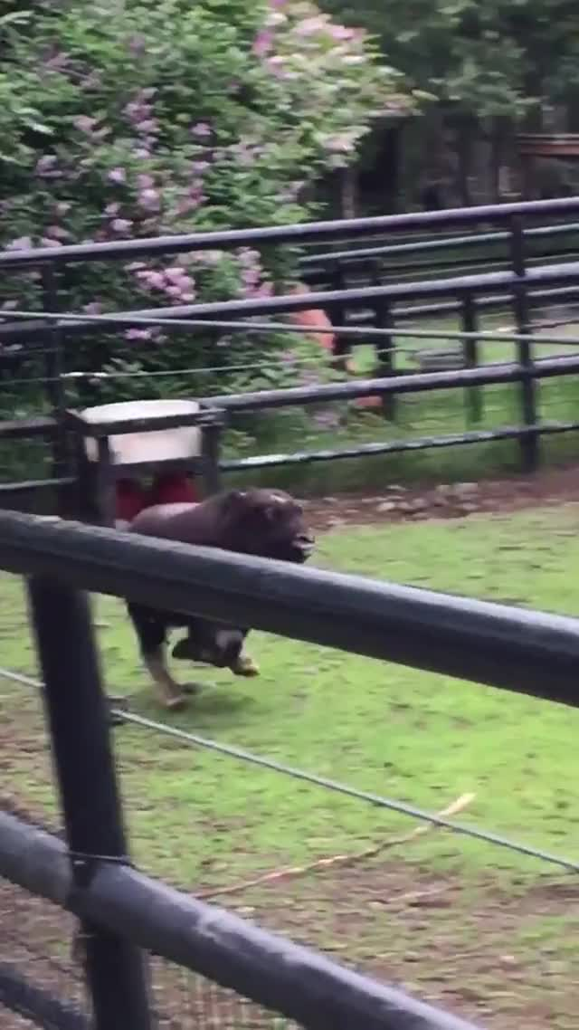 Watch zoomies GIF on Gfycat. Discover more related GIFs on Gfycat