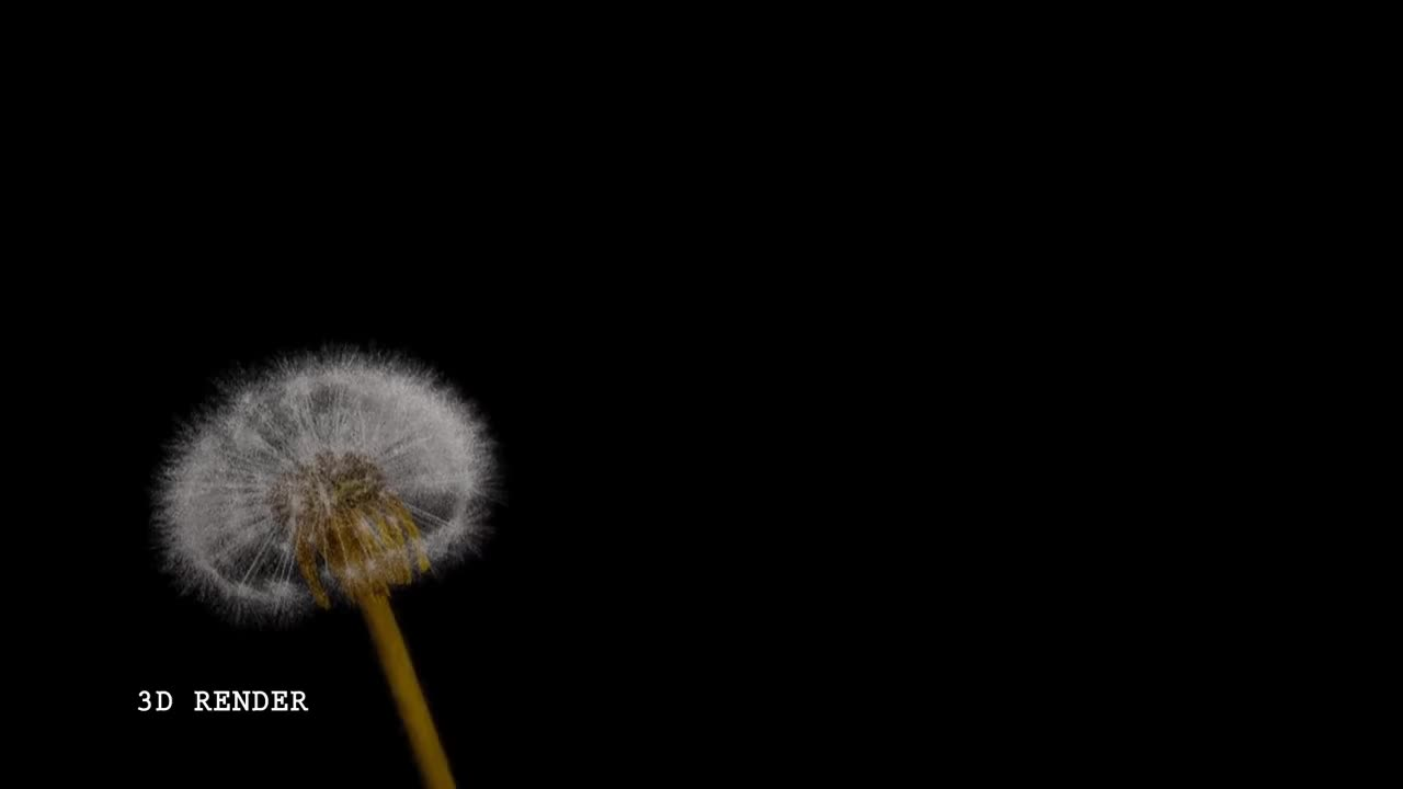 animation, compositing, photoreal, realism, vray, 3ds max Dandelion GIFs