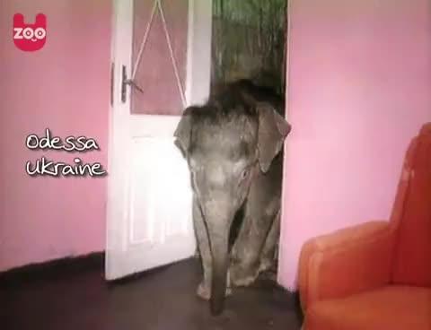 Watch elephant GIF on Gfycat. Discover more baby elephant, odd, ukraine, uzoo GIFs on Gfycat