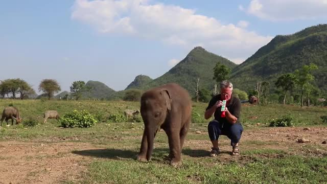 Watch and share Baby Elephant And Red Toy Clarinet GIFs by PM_ME_STEAM_K3YS on Gfycat
