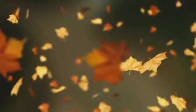 Watch and share Falling Autumn Leaves Background GIFs on Gfycat