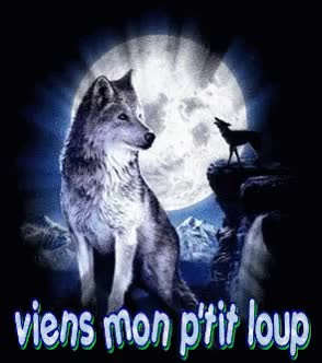 Watch and share Viens Mon P'tit Loup GIFs on Gfycat