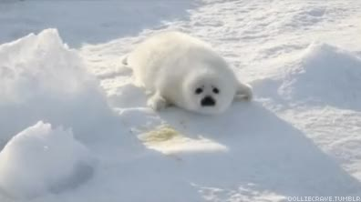 Watch seal pup  GIF by RoyalKoala23 (@hhrk23) on Gfycat. Discover more related GIFs on Gfycat