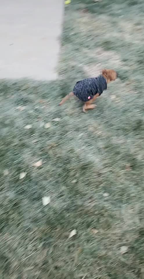 Watch and share Sweater Zoomies GIFs by bbanton on Gfycat